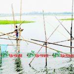 গাজনার বিলে অবাধে চলছে ছোট ও ডিমওয়ালা মাছ নিধন